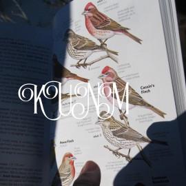 AIR: New Mexico Birders Contribute to Citizen Science