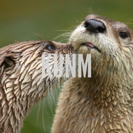 BLOG: If You Think This is Funny You Otter Get Out More…