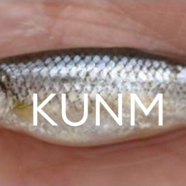 SERIES: Endangered Art of Compromise: The Rio Grande Silvery Minnow